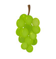 grapes fruit icon isolated fruits and vegetables vector image vector image