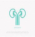 kidney thin line icon symbol of urologist vector image