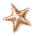 realistic 3d starfish sea invertebrate a vector image