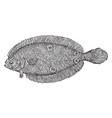 american fourspot flounder vintage vector image vector image