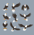 bald eagle image set on grey background vector image vector image