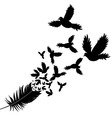 Feather of bird vector image vector image