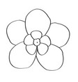 isolated flower image vector image