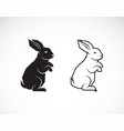 rabbit design on white background wild animals vector image