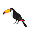 toucan tropical exotic bird on vector image