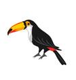 toucan tropical exotic bird vector image