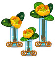blooming yellow nuphar lutea in glass vase vector image