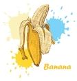 hand draw banana vector image vector image