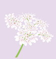 white flowers close up vector image vector image