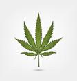 realistic marijuana leaf cannabis plant isolated vector image