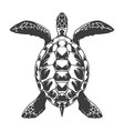 vintage turtle top view concept vector image