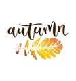 Autumn hand written inscription vector image vector image