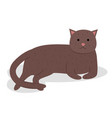 cute cartoon kitty with brown colored fur lies on vector image vector image