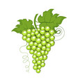 ripe grape isolated on white vector image vector image
