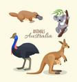 australia animals collection brown kangaroo vector image vector image