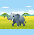 cartoon funny elephant in the jungle vector image vector image