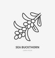 sea buckthorn flat line icon medical herb sign vector image vector image