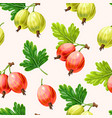 seamless pattern with green and pink gooseberry vector image vector image