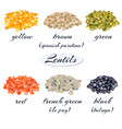various types of lentils vector image