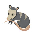 cartoon possum possum vector image vector image