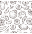 citrus sketch pattern natural lemon orange leaves vector image