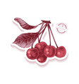 sticker with hand drawn cherry branch vector image vector image
