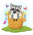 cartoon funny raccoon in basket vector image vector image
