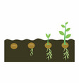 plants growing in soil vector image