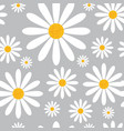 seamless pattern with chamomile flowers on grey vector image vector image