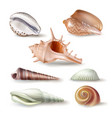 set of seashells of various vector image