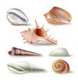 set of seashells of various vector image vector image