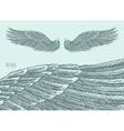 Angel Wings Engraved sketch vector image