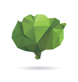 Cabbage abstract isolated on a white backgrounds vector image