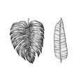 palm plant tropical monstera exotic leaves and vector image vector image