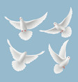 white pigeons dove love flying birds in sky vector image vector image