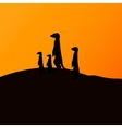 a group of meerkats vector image vector image