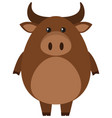 brown buffalo on white background vector image vector image