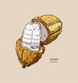 cocoa beans hand draw sketch vector image