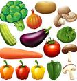 Different kind of fresh vegetables vector image vector image