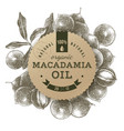 macadamia oil label with hand drawn nuts vector image vector image