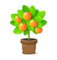 orange tree isolated on white background vector image vector image