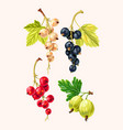 set of high detailed currant berries vector image