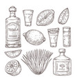 agave tequila sketch vintage glass shot bar vector image vector image