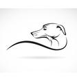 image of an dog azawakh vector image
