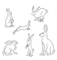 rabbits with lines vector image