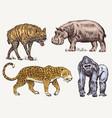set african animals hippopotamus leopard hyena vector image vector image