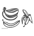 set hand drawn black and white bananas vector image vector image