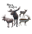 set two moose and reindeers isolated on white vector image