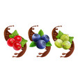 blueberry gooseberry and red currant in chocolate vector image vector image
