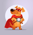 dog superhero character in mask vector image